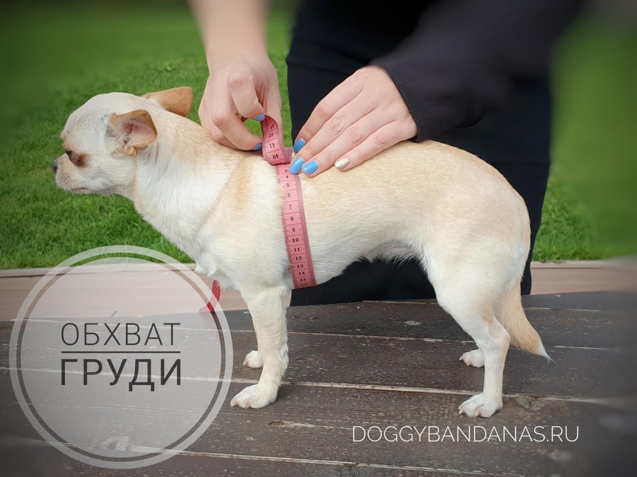 Одежда для собак породы болонки